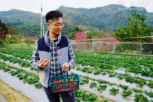 劉正男高冷草莓園 (10)