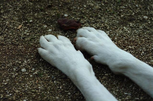 A két mellső lábak