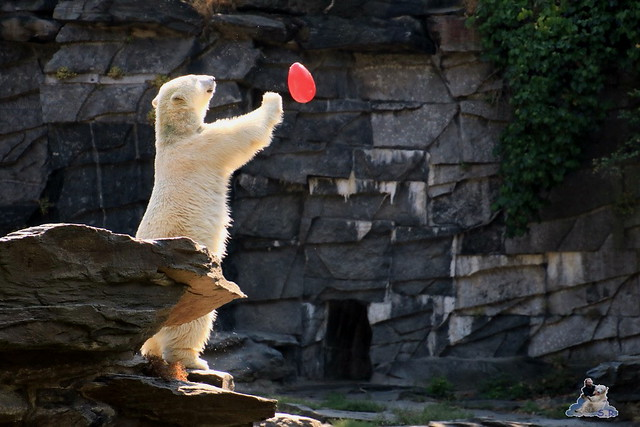 Tierpark Berlin 23.08.2015  0105