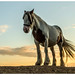 horse by bojangles_1953