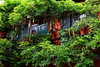 giardini di ringhiera by soyluphoto