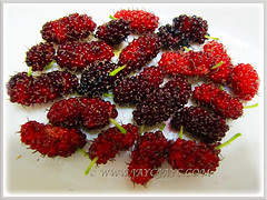Colourful mulberries of Morus nigra (Black Mulberry, Blackberry, Indian/Persian Mulberry, Silkworm Mulberry), Aug 19 2015