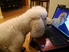 Sherlock insists on his own laptop to look at his selfies.