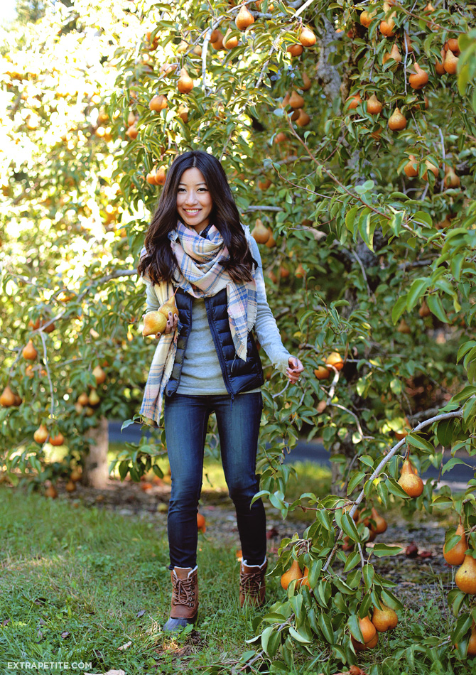 Pear Picking At Honey Pot Hill Extra Petite Bloglovin