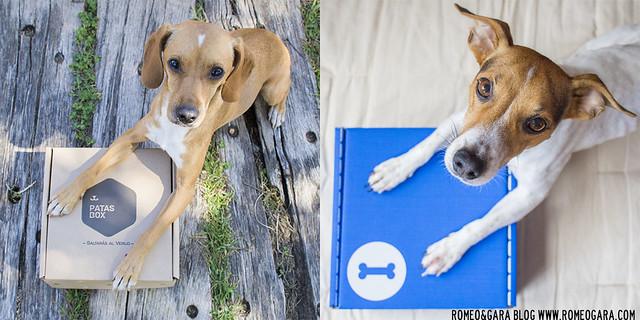 Mascoticlub y PatasBox: cajas de suscripción para mascotas