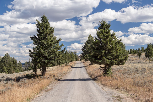 gravel road on Blacktail Plateau Drive