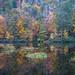 Brushy Lake Reflection by Tony Barber --The Jolly Swagman