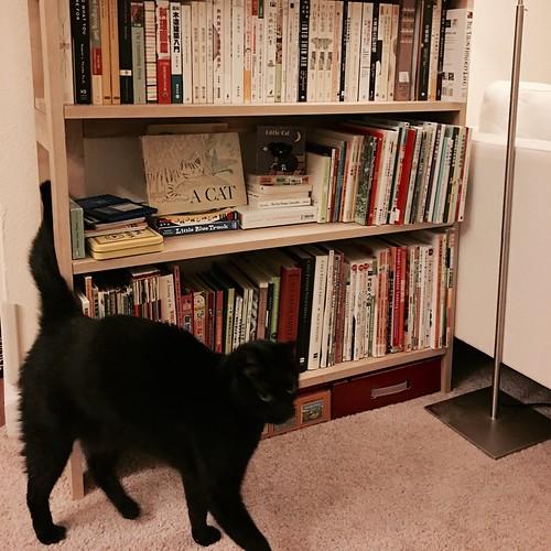 黑貓比例尺