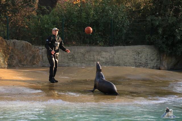 Zoo Berlin 06.12.2015    041