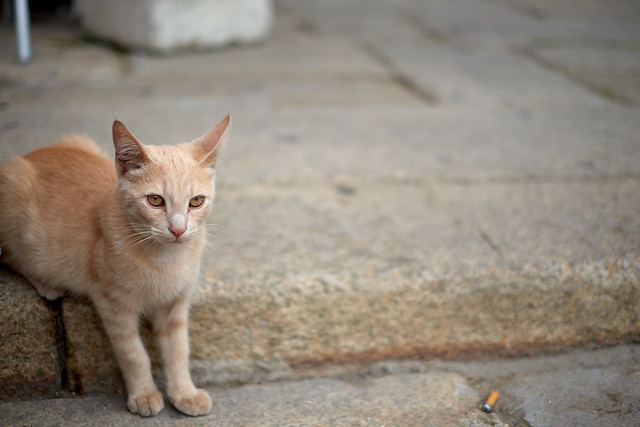 Stray and Nervous