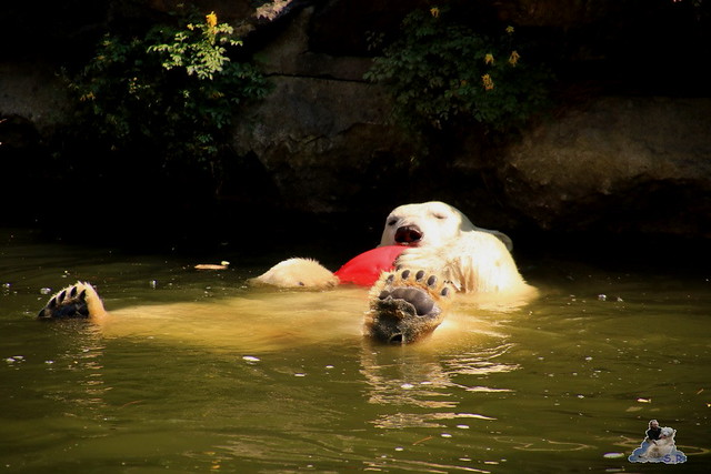 Tierpark Berlin 23.08.2015  0109
