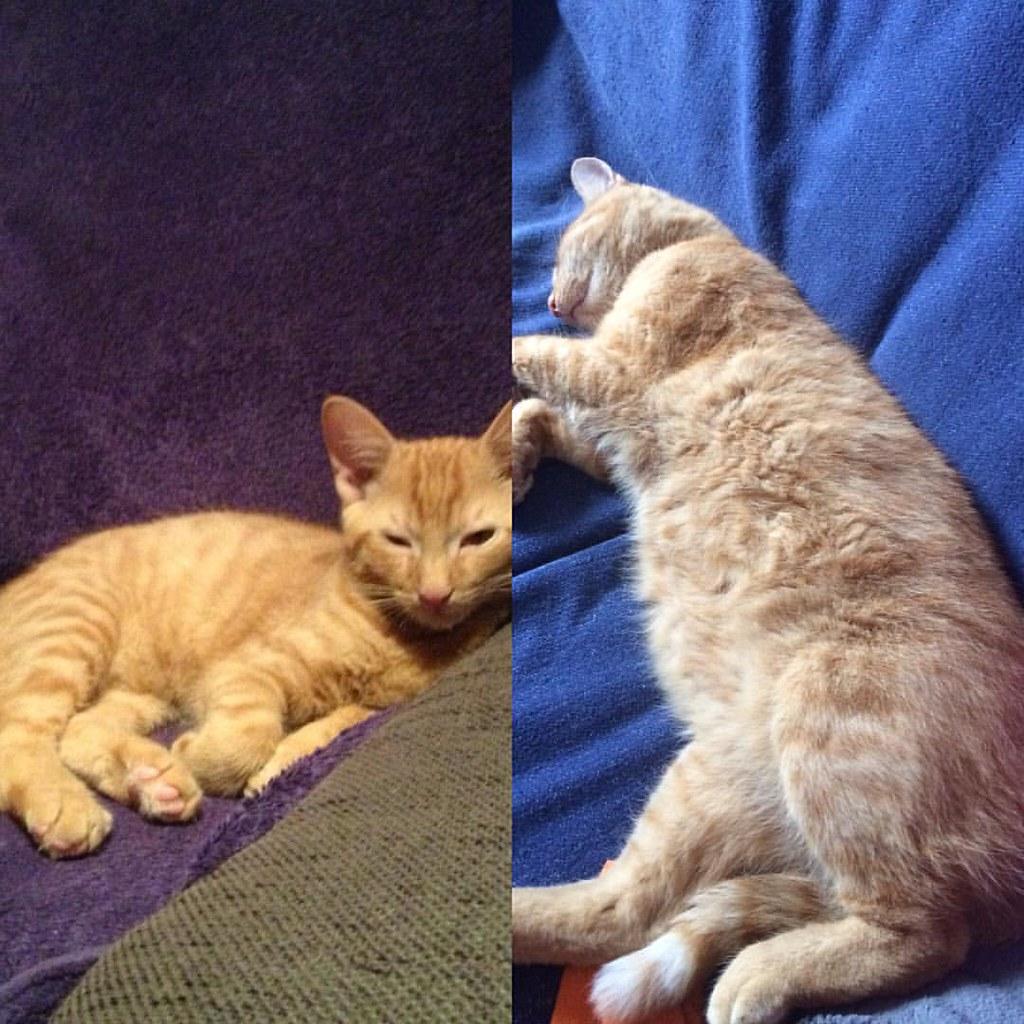 Vor fast 3 Jahren und heute, der Kleine ist anständig gewachsen😻😻😻😻 #Garfield #instacat #cats #kater