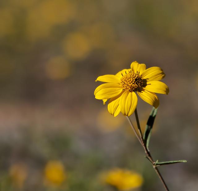 Flower 20d_2571