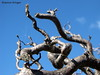 branched out reaching