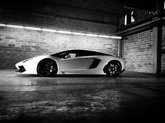 automobile(1.0), lamborghini(1.0), lamborghini aventador(1.0), wheel(1.0), vehicle(1.0), performance car(1.0), automotive design(1.0), lamborghini(1.0), monochrome photography(1.0), lamborghini gallardo(1.0), land vehicle(1.0), monochrome(1.0), luxury vehicle(1.0), black-and-white(1.0), sports car(1.0),