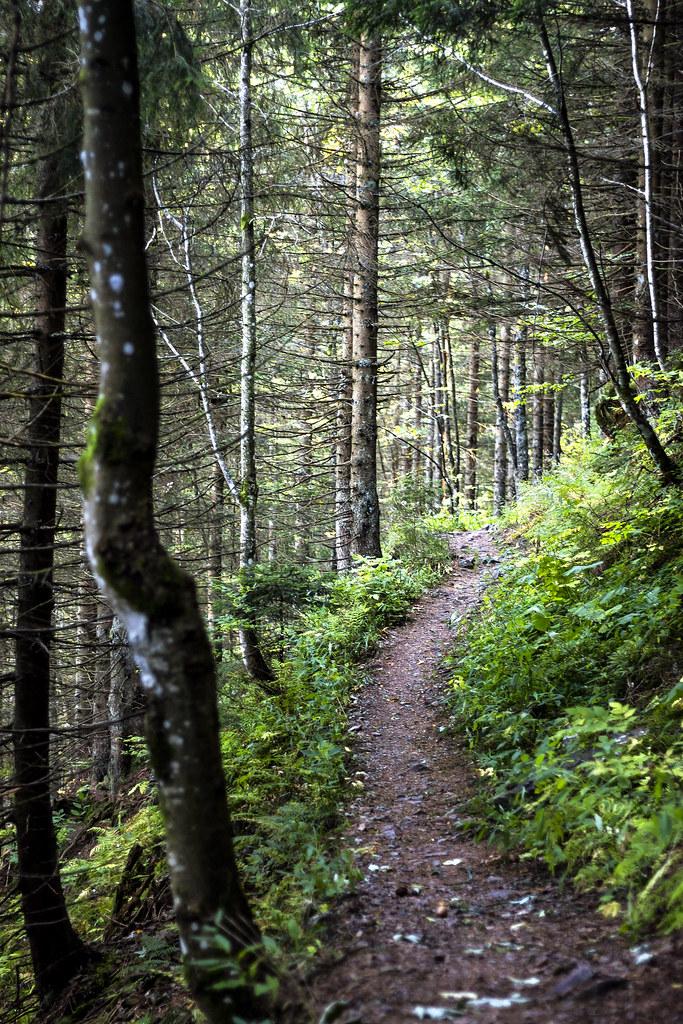 Sendero en el bosque de Feldberg
