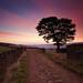 Wessenden Moor Autumn Dawn by Chris Nickerson