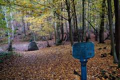 5458  L'automne dans la forêt de Meudon