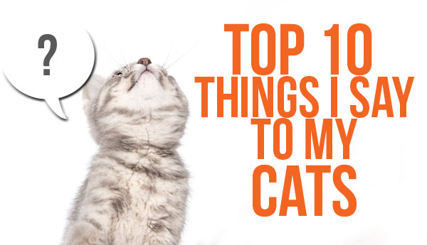things-i-say-to-cats