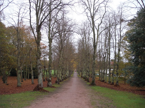 Tree-lined Avenue, Ampthill (I)