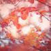 autumn's eye by pixiespark