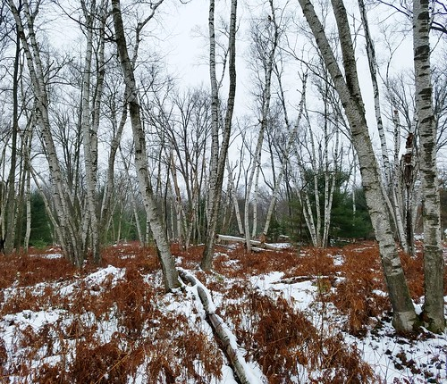 Marion Brooks Natural Area