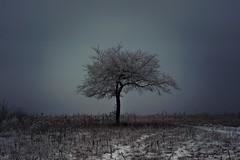 Winter's Spell...