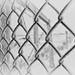 Fences by L E Dye