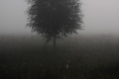 portrait of the tree