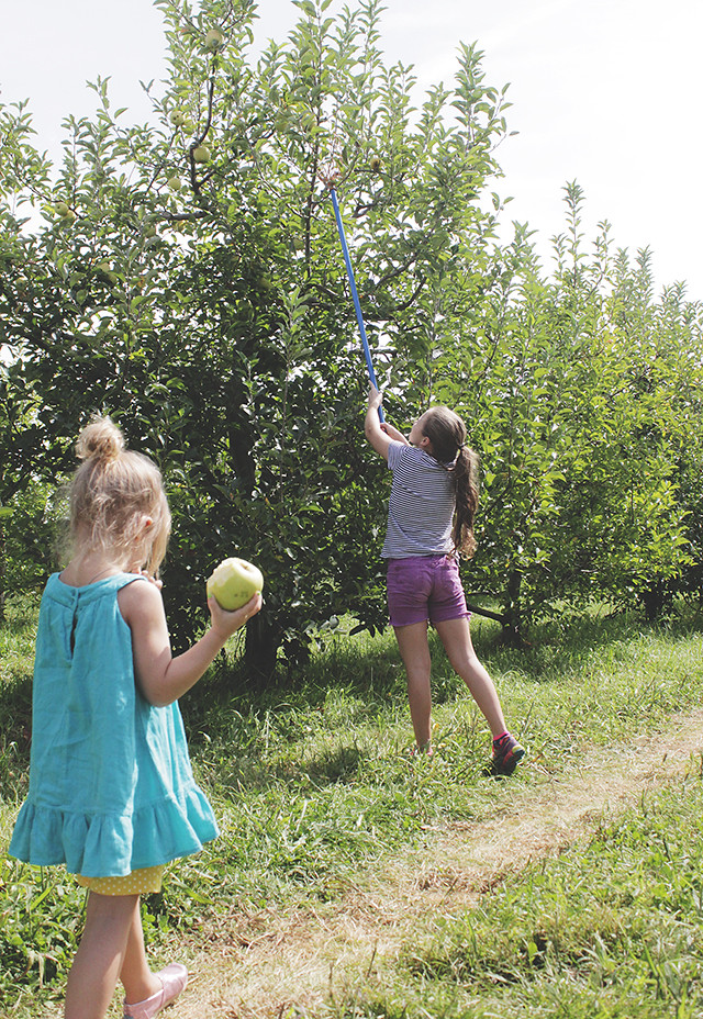 Apple Orchard 2015