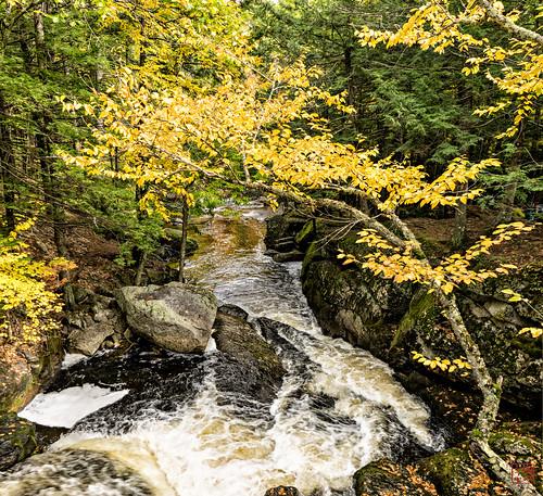 bridge water foliage hillsboro stonebridge fall2015