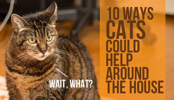ways-cats-could-help-around-the-house