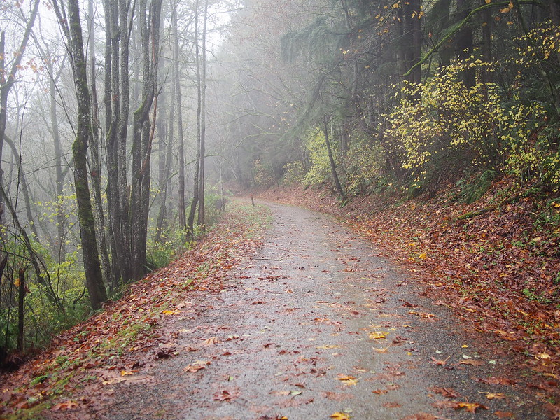 Foggy Snoqualmie Valley Trail