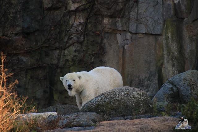 Zoo Berlin 08.11.2015  0135