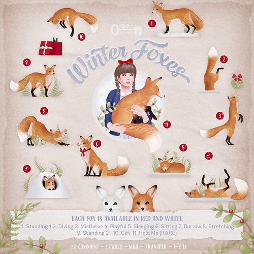 Winter Foxes - Contact Key