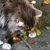 Cat and icecube #catinthesunshine