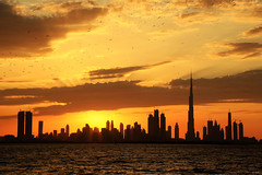 Flock of seagulls over Dubai sunset