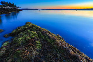 Seaweed Sunset: Boothbay Harbor, Maine