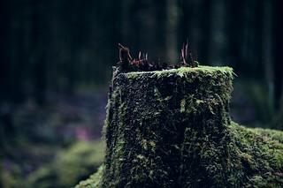 Hoh Rainforest [24115]