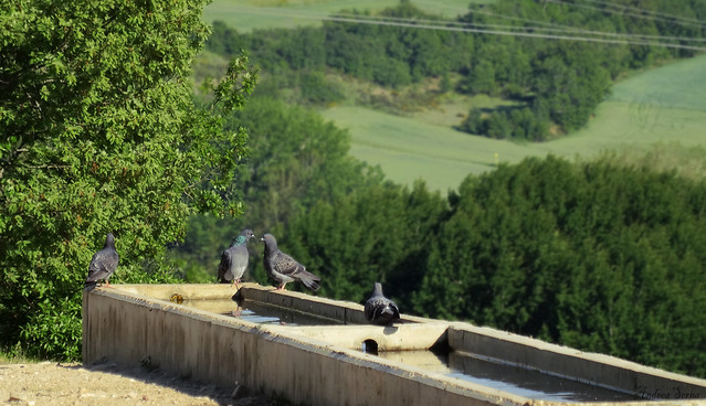 Reunion de palomas//meeting of pigeons