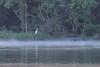 Egret, Fog, Anacostia River