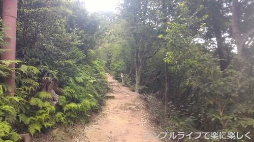 登山道、途中