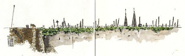 vignes Château d'angers