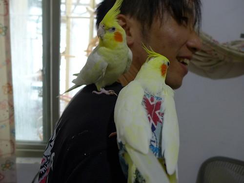玄鳳粉圓與Yui@Yui主人肩膀