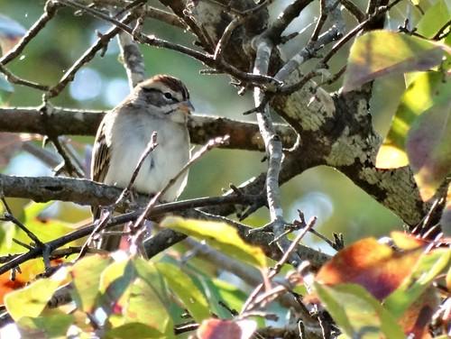 statepark bird fall virginia sparrow