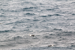 img_3183 Elephant Island 1866