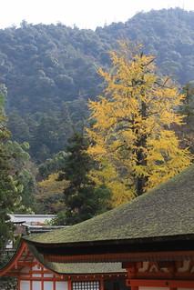 厳島神社とイチョウ
