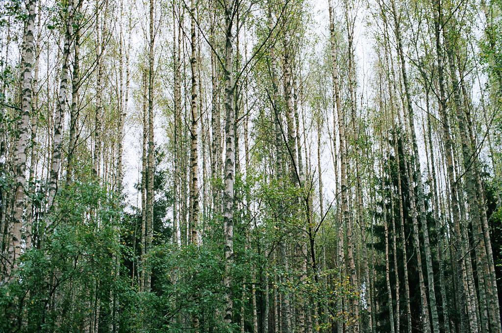 12. wood water