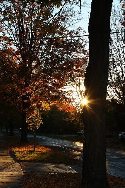 Neighbourhood trees