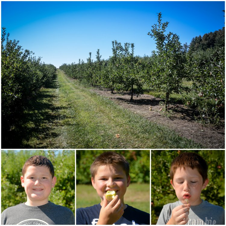 apple pickin' boys